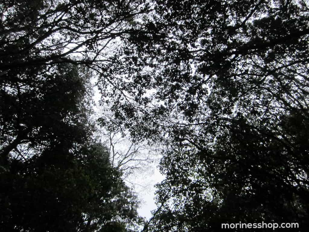 Karura forest trees